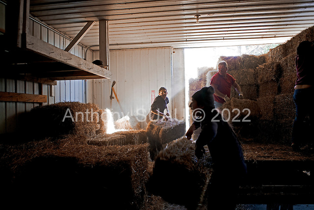 East Round Lake, Minneasota<br /> October 16, 2014<br /> <br /> Winona LaDuke and her family unload hay being delivered to her organic farm.