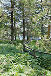 Overgrown trail along high coastal bluffs at Natural Bridges Viewpoint, on the Oregon coast, state of Oregon, U.S.A.  Rail fence with wire, braken fern, hemlock and fir trees filtering view.