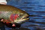 Colorado Rainbow Trout
