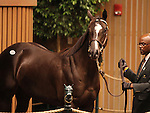 Hip #252 More Than Ready - Rough Water filly at the Keeneland September Yearling Sale.  September 11, 2012.