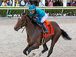 January 30, 2021:  Greatest Honour with jockey Jose L Ortiz on board, wins the Holy Bull Stakes, at Gulfstream Park in Hallandale Beach, Florida. LizLamont/Eclipse Sportswire/CSM