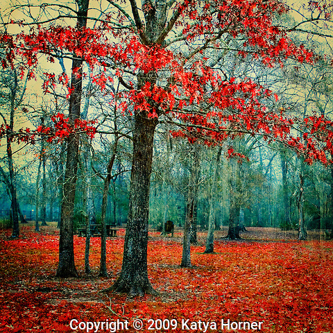 A decorative landscape photo from my Passionate Earth series, a series characterized by strong color, texture, fog and trees.