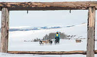 Pinedale Sled Dog Classic