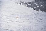 An aerial view of a polar bear walking across an ice field.