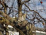 Cat in a tree, PA