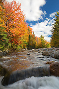 Gale River Forest - Autumn foliage along the Gale River in the White Mountain, New Hampshire USA.
