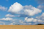 Europa, DEU, Deutschland, Nordrhein Westfalen, NRW, Eifel, Mechernich , Landschaft, Agrarlandschaft, Sommer, Himmel, WOlken, Cumuluswolken, Haufenwolke, Kategorien und Themen, Landwirtschaft, Landwirtschaftlich, Agrar, Agrarwirtschaft, Erzeugung, Landwirtschaftliche Produkte, Wetter, Himmel, Wolken, Wolkenkunde, Wetterbeobachtung, Wetterelemente, Wetterlage, Wetterkunde, Witterung, Witterungsbedingungen, Wettererscheinungen, Meteorologie, Bauernregeln, Wettervorhersage, Wolkenfotografie, Wetterphaenomene, Wolkenklassifikation, Wolkenbilder, Wolkenfoto<br /> <br /> [Fuer die Nutzung gelten die jeweils gueltigen Allgemeinen Liefer-und Geschaeftsbedingungen. Nutzung nur gegen Verwendungsmeldung und Nachweis. Download der AGB unter http://www.image-box.com oder werden auf Anfrage zugesendet. Freigabe ist vorher erforderlich. Jede Nutzung des Fotos ist honorarpflichtig gemaess derzeit gueltiger MFM Liste - Kontakt, Uwe Schmid-Fotografie, Duisburg, Tel. (+49).2065.677997, archiv@image-box.com, www.image-box.com]