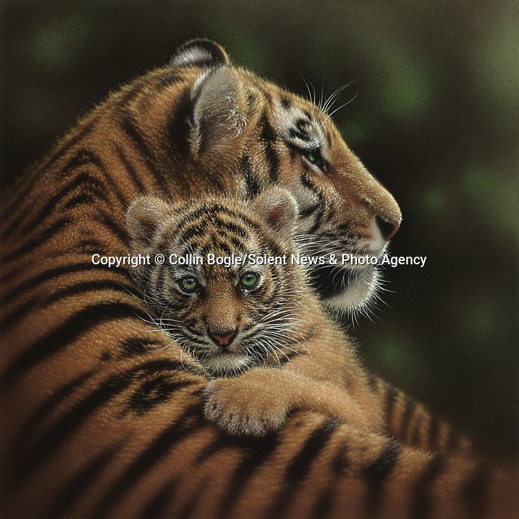 """NOTE FOR ONLINE:  MAXIMUM OF 10 IMAGES TO RUN ALONGSIDE THIS STORY - UNLESS OTHERWISE AGREED WITH A REVISED FEE IN PLACE.<br /> <br /> Pictured:  One of Collin Bogle's realistic paintings: Cherished<br /> <br /> These intricately detailed pictures of wild animals look like photographs - but are in fact paintings.  American artist Collin Bogle's extraordinary work portrays close up encounters with animals such as lions, snow leopards, wolves, eagles and bears.<br /> <br /> He uses photos of the animals as a reference and spends between two weeks and two months painstakingly creating each piece.  Mr Bogle, who works out of his home in Seattle, Washington, in the United States, said: """"My dad is an artist and was also a high school art teacher - so I started learning to paint as soon as I could hold a brush.  SEE OUR COPY FOR DETAILS.<br /> <br /> Please byline: Collin Bogle/Solent News<br /> <br /> © Collin Bogle/Solent News & Photo Agency<br /> UK +44 (0) 2380 458800"""