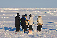 inupiaq whalers pull a share of bowhead whale, Balaena mysticetus, muktuk (strips of skin and blubber) for villagers in Barrow, Chukchi Sea, Arctic Alaska