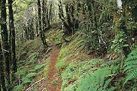A tramping track through the beautiful bush towards the Wangapeka Saddle on the Wangapeka Track - Kahurangi National Park