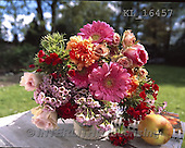 Interlitho, FLOWERS, BLUMEN, FLORES, photos+++++,flowers, red, pot,KL16457,#F#
