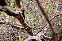 A monkey in a forest in the Phnom Tnout Phnom Pok Wildlife Sanctuary, in northern Cambodia.