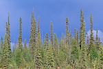 Mackenzie Mountains, Northwest Territories, Canada