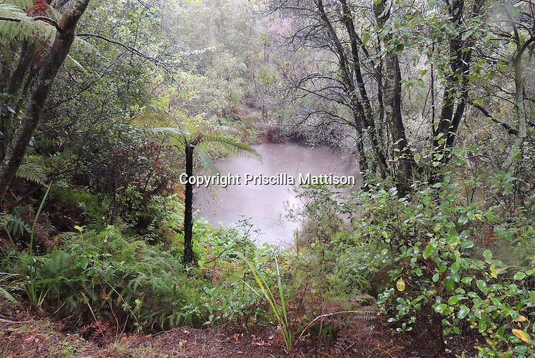 Rotarua, New Zealand - September 15, 2012:  A mud pool is surrounded by lush vegetation.
