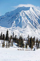 Cody Strathe runs on Puntilla Lake shortly before arriving at the Rainy Pass checkpoint during the 2018 Iditarod race on Monday March 05, 2018. <br /> <br /> Photo by Jeff Schultz/SchultzPhoto.com  (C) 2018  ALL RIGHTS RESERVED