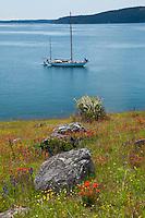 Orion at Anchor and Wildflowers of Yellow Island, San Juan Islands, Washington, US