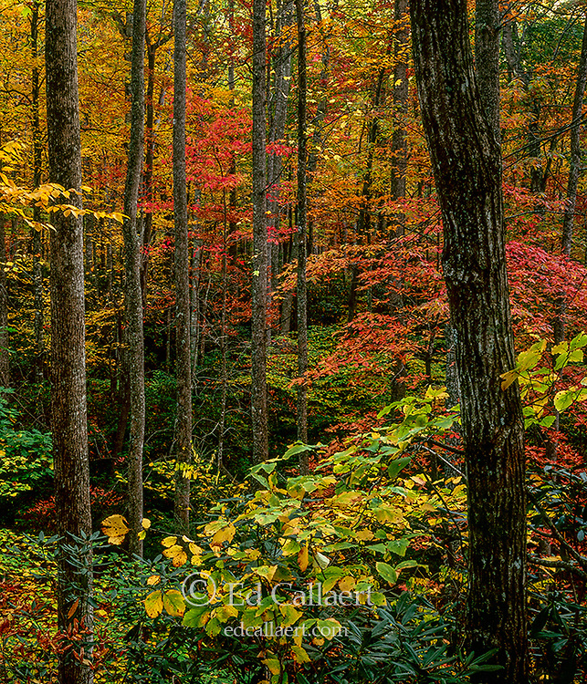 Autumn, Cradle of Forestry, Pisgah National Forest, North Carolina