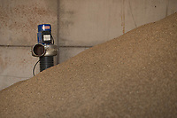 21.9.2020 Barley in a farm store <br /> ©Tim Scrivener Photographer 07850 303986<br />      ....Covering Agriculture In The UK.