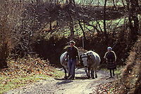 Europe/France/Midi-Pyrénées/09/Ariège/Cautirac: Attelage<br /> PHOTO D'ARCHIVES // ARCHIVAL IMAGES<br /> FRANCE 1980