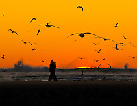 Gift card photo (set of 4) of couple walking along sandbar at sunset in Cannon Beach, OR with many seagulls flying overhead and waves crashing in the background.