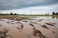 Flooded wheat field following heavy rain - Lincolnshire, January