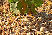 The gravelly  pebbly and sandy soil, typical of Medoc  - Chateau Belgrave, Haut-Medoc, Grand Crus Classe 1855