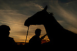 October 30, 2018 : A horse is washed in the barn area during morning workouts prior to the Breeders' Cup at Churchill Downs on October 30, 2018 in Louisville, Kentucky. Scott Serio/Eclipse Sportswire/CSM