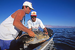 Jeff Seminoff & Yoshio Sazuki Releasing Black Sea Turtle