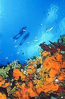 Snorkelers at Life's Reef.St. John.U.S. Virgin Islands