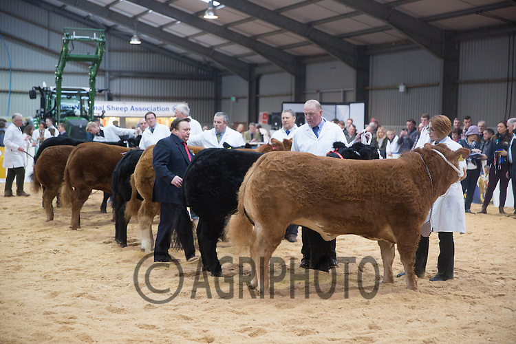 The East Of England Smithfield Festival 2016<br /> Picture Tim Scrivener -www.agriphoto.com<br /> Mobile 07850 303986 e-mail tim@agriphoto.com<br />           ….covering agriculture in the Uk….