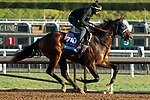 ARCADIA, CA  OCTOBER 30:  Breeders' Cup Juvenile  entrant Storm the Court, trained by Peter A. Eurton,   exercises in preparation for the Breeders' Cup World Championships at Santa Anita Park in Arcadia, California on October 30, 2019.  (Photo by Casey Phillips/Eclipse Sportswire/CSM)