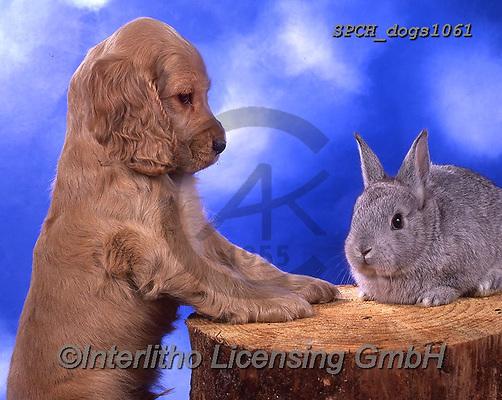 Xavier, ANIMALS, REALISTISCHE TIERE, ANIMALES REALISTICOS, dogs, photos+++++,SPCHDOGS1061,#a#, EVERYDAY
