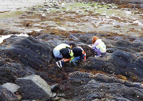 Young Coastwatch volunteers surveying the seashore on the Beara Peninsula