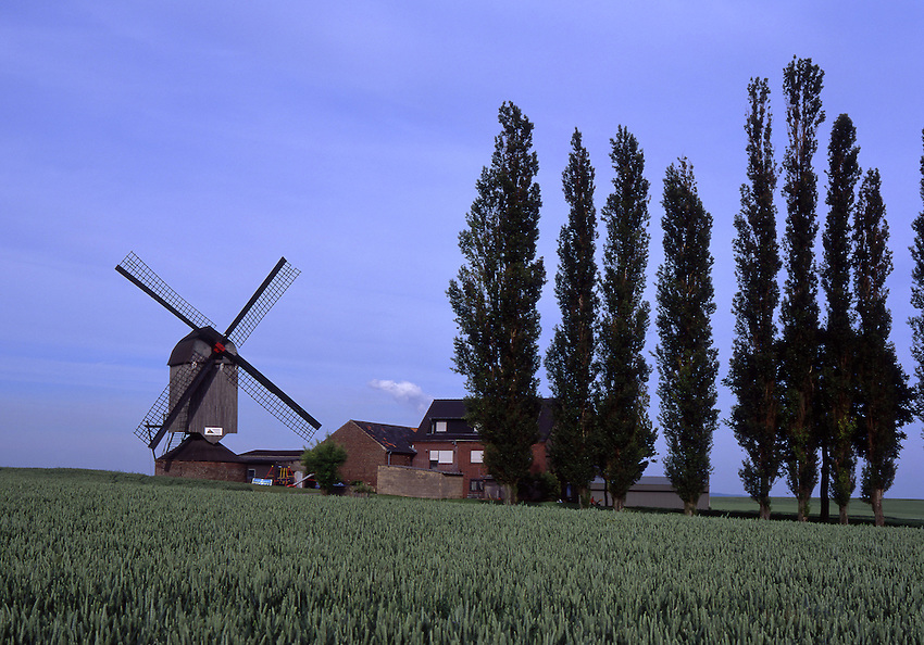 Europe, DEU, Germany, North Rhine Westphalia, Rhineland, Lower Rhine, Titz, Typical Windmill, Dueppelsmuehle....[ For each utilisation of my images my General Terms and Conditions are mandatory. Usage only against use message and proof. Download of my General Terms and Conditions under http://www.image-box.com or ask for sending. A clearance before usage is necessary...Material is subject to royalties. Each utilisation of my images is subject to a fee in accordance to the present valid MFM-List...Contact | archive@image-box.com | www.image-box.com ]