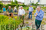Volunteers help out in the allotment in Moyderwell, catering for their own allotment as well as for people who cant attend to their own at the moment. <br /> Front left:  Peter Colleran, <br /> Back l to r: Tommy Sweeney, Frank Houlihan, Philomena O'Dea, Liam Scanlon, Liz Raitt and Sophie O'Mahoney.