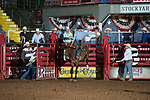 Jarrod Hammons on Hacksaw of Stockyards Pro Rodeo during first round of the Fort Worth Stockyards Pro Rodeo event in Fort Worth, TX - 8.16.2019 Photo by Christopher Thompson