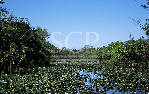 Florida, USA. Channel of water in the Everglades covered in lily pads with thick vegetation on both sides.