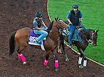 October 27, 2014:  Goldencents, trained by Leandro Mora, exercises in preparation for the Breeders' Cup Dirt Mile at Santa Anita Race Course in Arcadia, California on October 27, 2014. John Voorhees/ESW/CSM