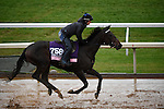 October 28, 2015:  Right There, trained by J. Keith Desormeaux and owned by Big Chief Racing LLC, exercises in preparation for the The 14 Hands Winery Breeders' Cup Juvenile Fillies at Keeneland Race Track in Lexington, Kentucky on October 28, 2015. John Voorhees/ESW/CSM