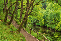 Path along Teign river. Devon County, England