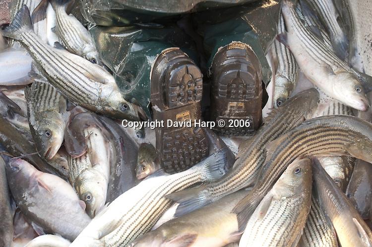 Nanticoke River, Poundnet fishing