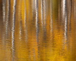 Vibrant fall color and aspens reflected on a quiet pond.