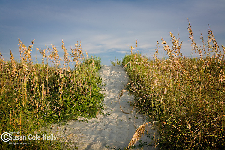 Sea Oats on the Carolina Coast, Atlantic Beach, SC, USA