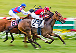 FRANKLIN, KY - SEPTEMBER 08: Taxman #2, ridden by Julien Leparoux, battles Fooch #4, ridden by Julio Garcia and Uber Kirk #8, ridden by Brian Hernandez, for the lead down the stretch and wins in an undercard race on Kentucky Turf Cup Day at Kentucky Downs on September 8, 2018 in Franklin, Kentucky. (Photo by Scott Serio/Eclipse Sportswire/Getty Images)