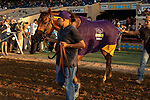 """DEL MAR, CA  AUGUST 18:  #5 Accelerate wears his Breeders Cup Challenge cooler after winning the $1 Million TVG Pacific Classic (Grade l) """"Win and You're in Classic Division"""" on August 18, 2018 at Del Mar Thoroughbred Club in Del Mar, CA. (Photo by Casey Phillips/Eclipse Sportswire/Getty Images"""
