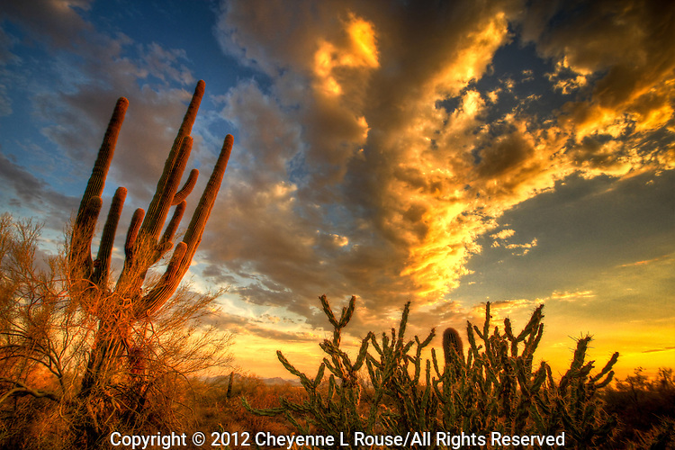 Golden Sunset - Arizona - McDowell Mountain Preserve - Scottsdale