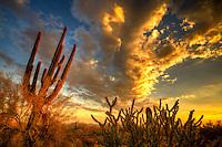 Golden Sunset - Arizona - McDowell Mountain Preserve - Scottsdale