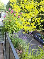 vorne: Labkraut, hinten: Indianernessel, mitte: Lavendel<br /> <br /> Europe, Germany, Ruhr Area, Wetter<br /> <br /> Europa, Deutschland, Ruhrgebiet, Wetter<br /> <br /> [MODEL RELEASE: NO, Copyright: Vera Schimetzek, Bornstrasse 5, 58300 Wetter, Germany, phone: 0049.2335.970650, mobil: 0049.151.21220918, www.schimetzek-foto.de, schimetzek@web.de,<br /> Die Verwendung des Fotos ist honorarpflichtig. Keine Verwendung ohne Genehmigung.  Es gelten die AGB.<br /> For use the general terms and conditions are mandatory. No use without permission. The use of the image is subject to a fee.]