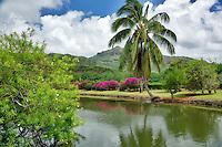 Palm over pond at Smith's Tropical Gardens, Kauai, Hawaii.
