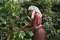 Guatemala,  Kaffee-Plantage bei Antigua